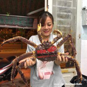 cua king crab ngon